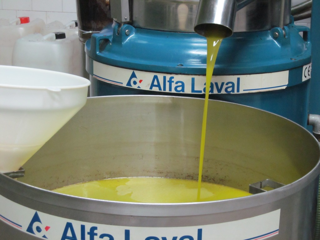 olive oil coming out of press